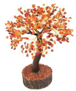 δέντρο καρνεόλης-chakra.gr